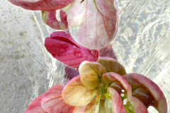 Shower Flower and water